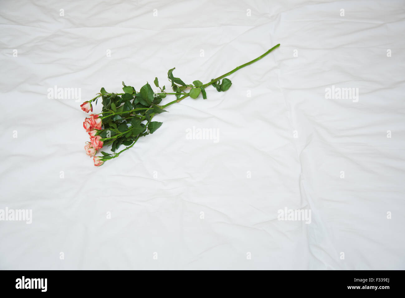 Rose on a bed. View from above. Horizontal photo - Stock Image