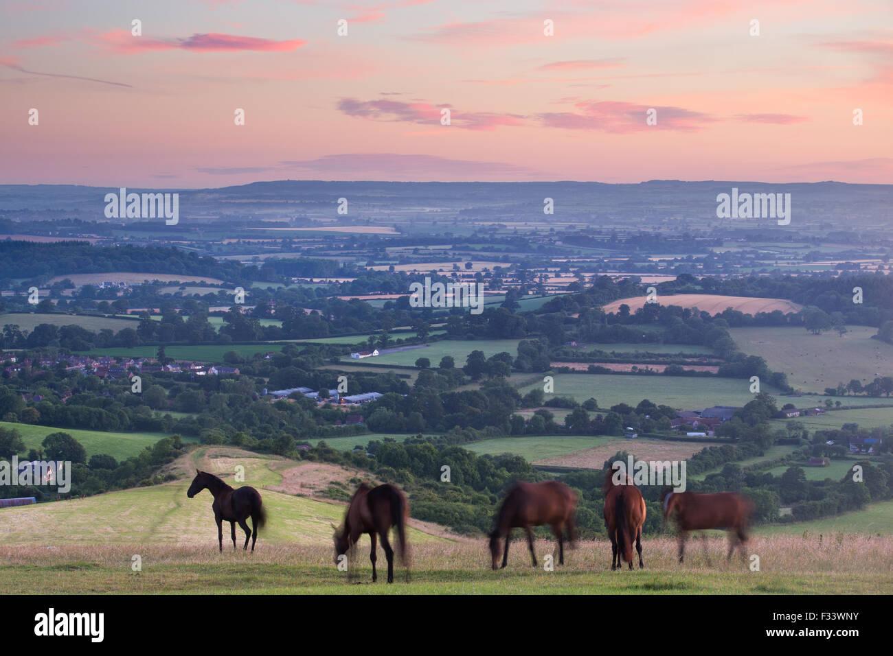 horses on Bulbarrow Hill at dawn, Dorset, England, UK - Stock Image