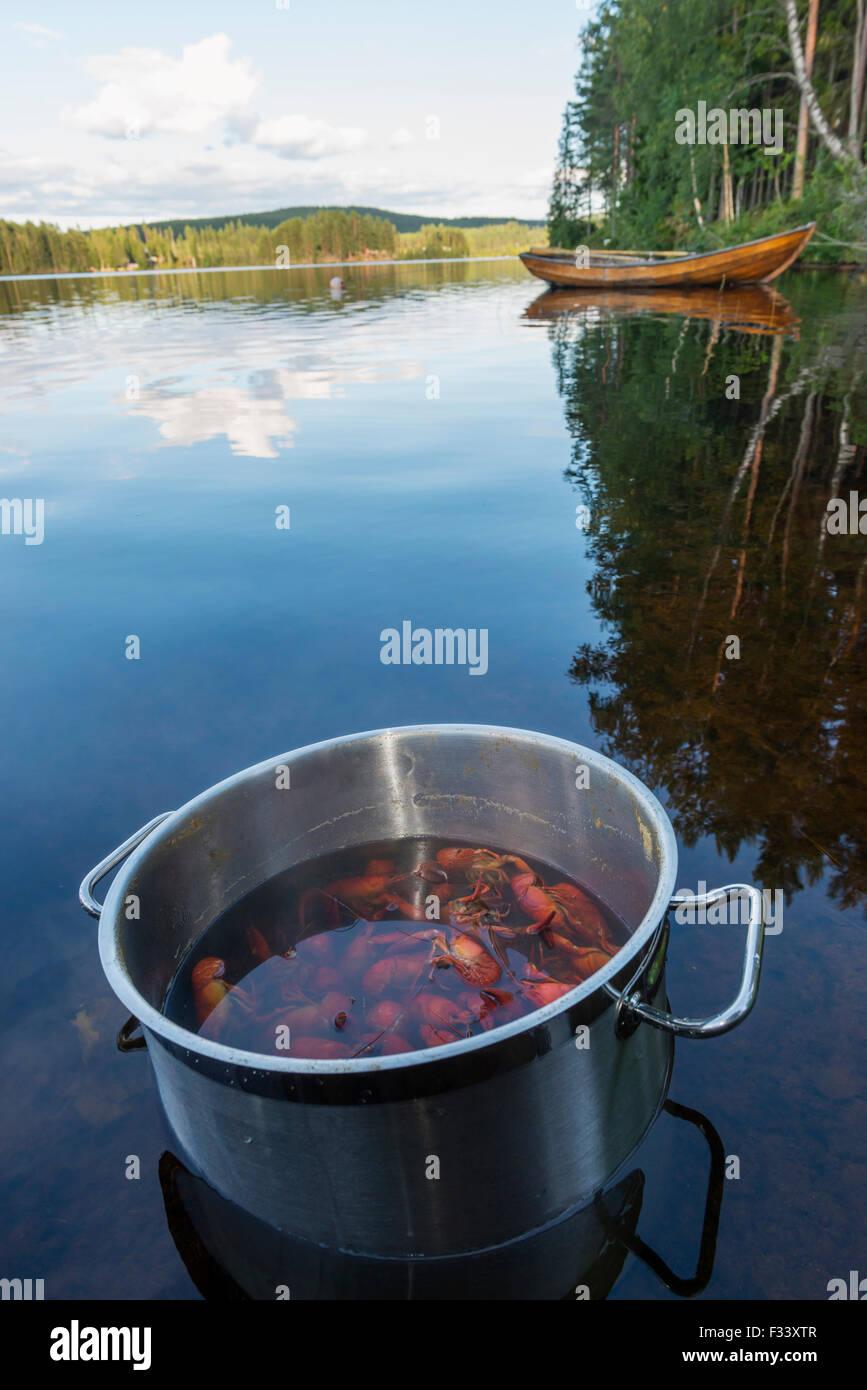 Crayfish - Stock Image