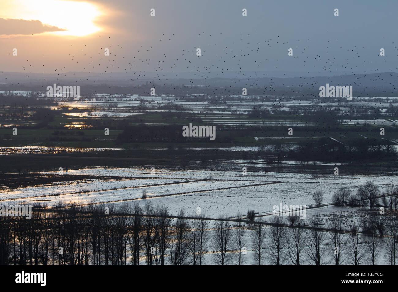 flooding nr Muchelney, Somerset, England, UK - Stock Image