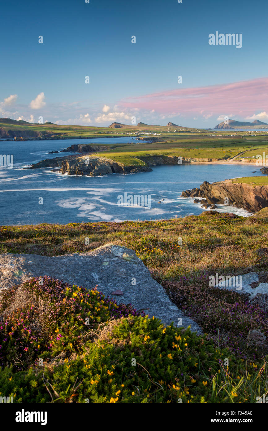 Evening sunlight over Ballyferriter Bay, Sybil Point and the peaks of the Three Sisters, Dingle Peninsula, County Stock Photo