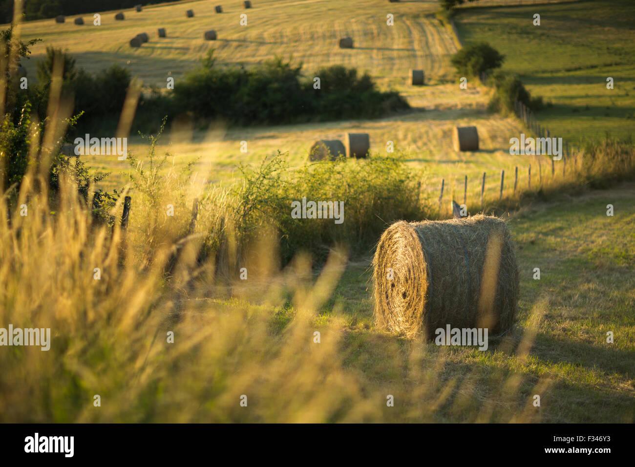 hay bales in the fields near Beaumont du Périgord, Pays de Bergerac, Dordogne, Aquitaine, France Stock Photo