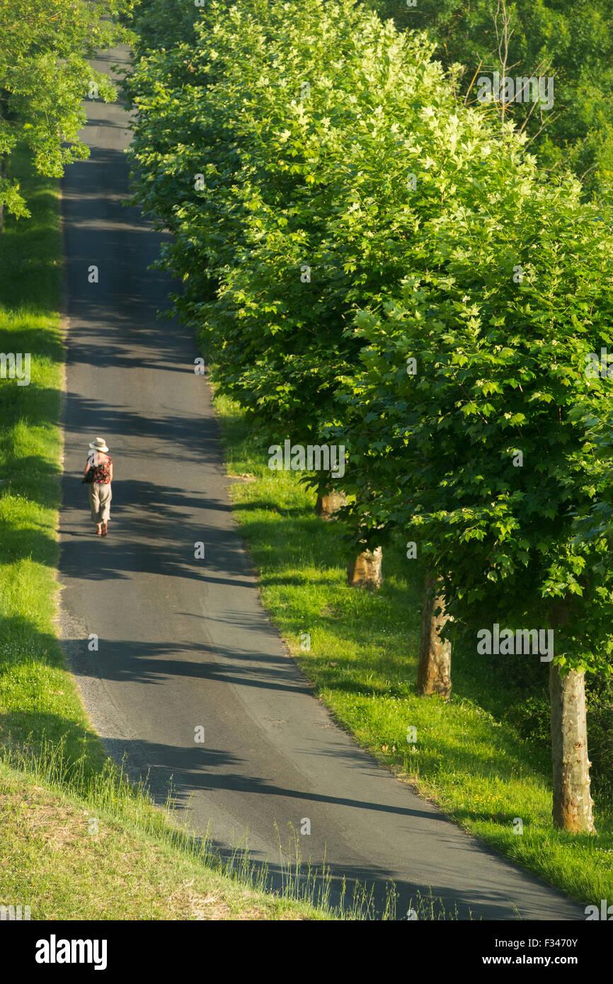 Wendy walking along a tree lined avenue in Beaumont du Périgord, Pays de Bergerac, Dordogne, Aquitaine, France - Stock Image