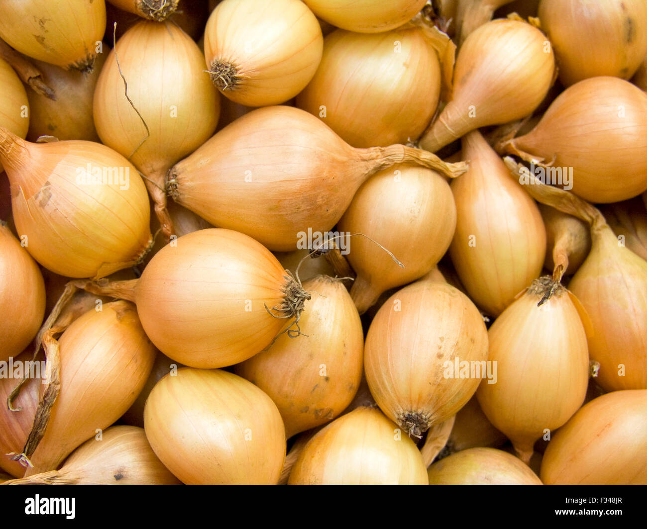 Agricultural background, a pile of beautiful bulb onions - Stock Image