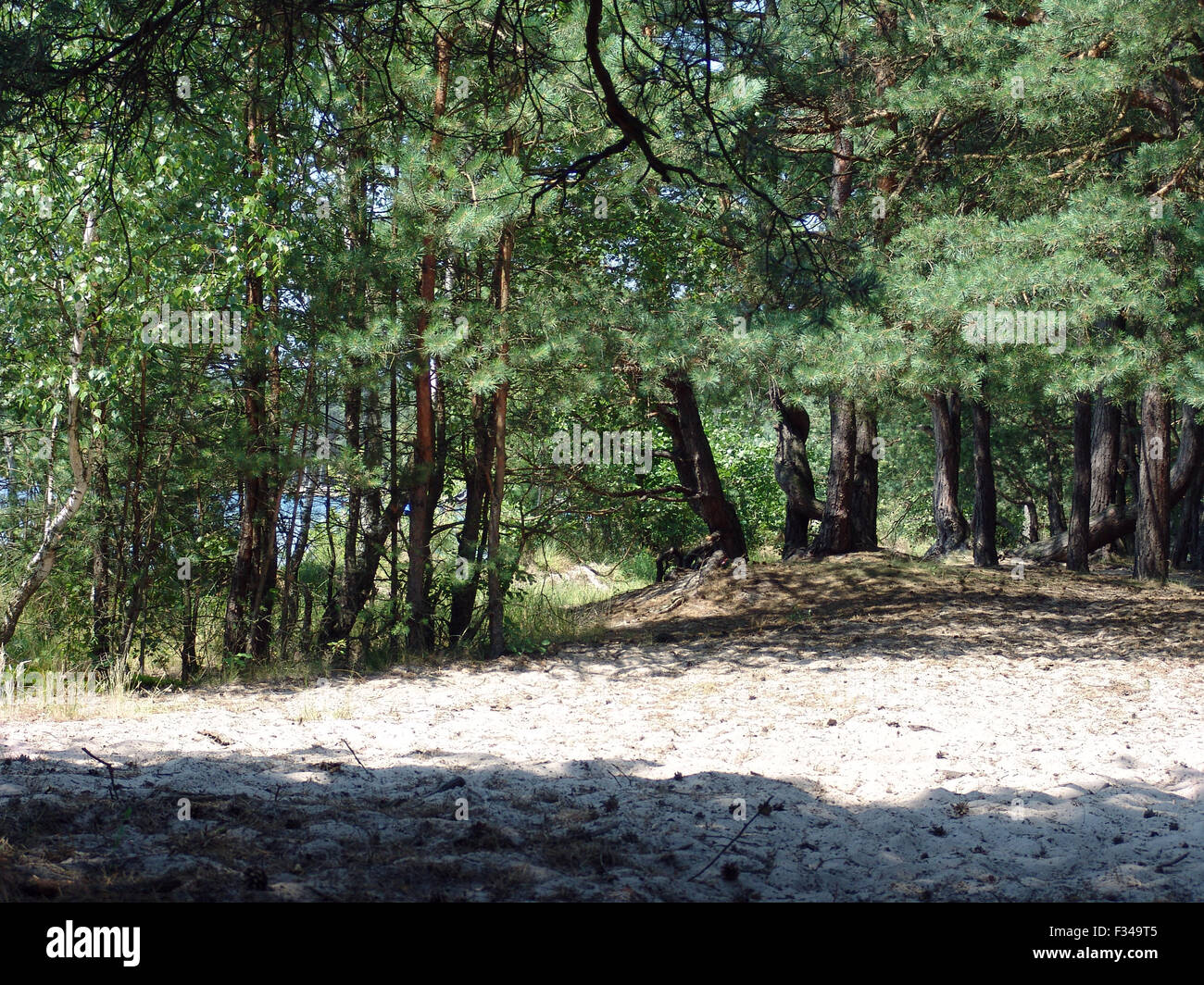 The woods sandy beach, beautiful wild nature landscape - Stock Image