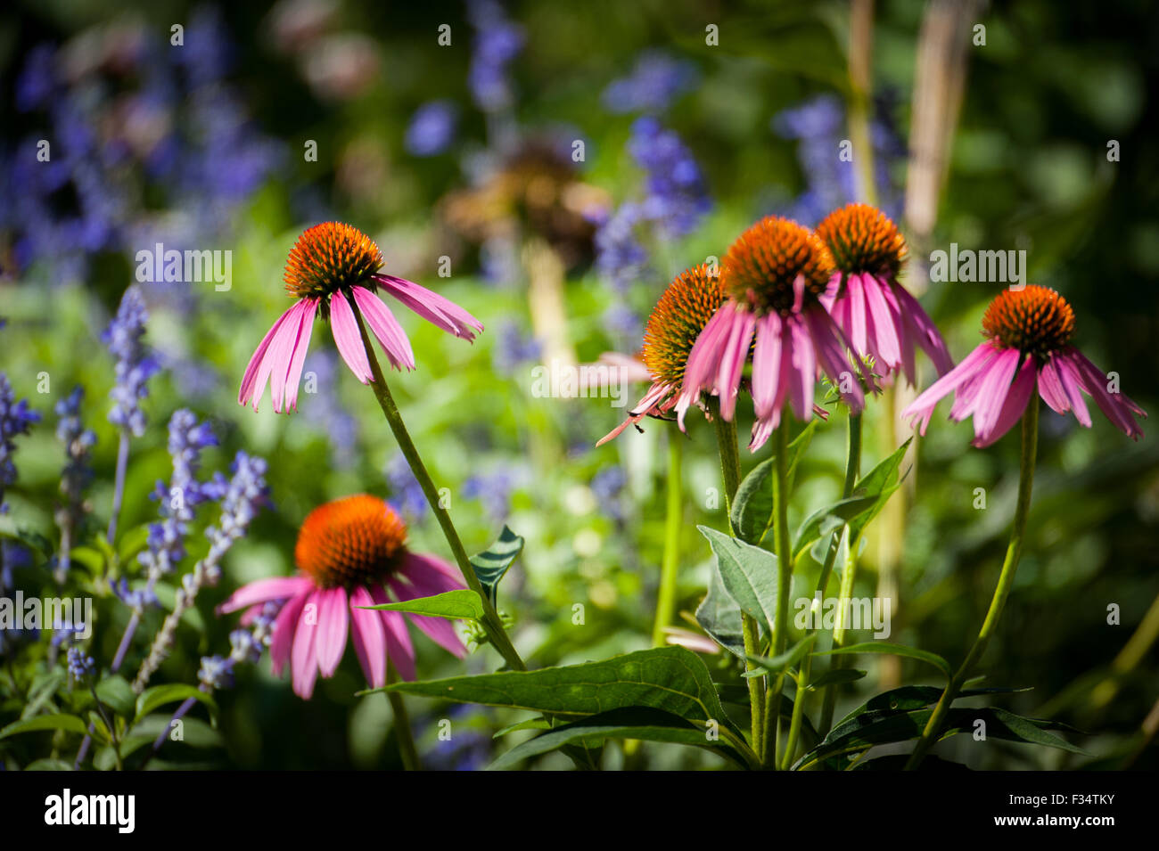 Beautiful Flowers - Stock Image