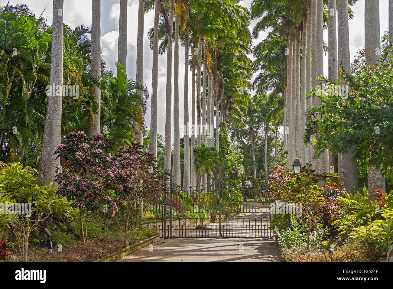 Palm Trees At The gates Barbados West Indies - Stock Image