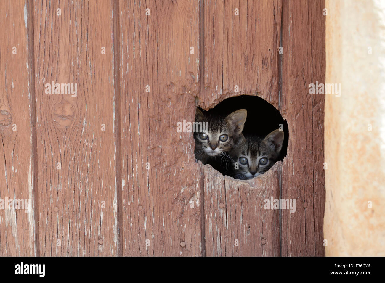 Delightful Two Little Cats Looking Trough A Cat Hole In A Door.