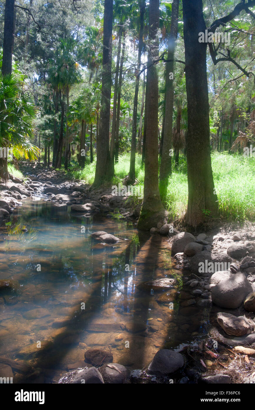 Carnarvon Gorge stream and eucalyptus forest shot contre jour Central Queensland Australia Stock Photo