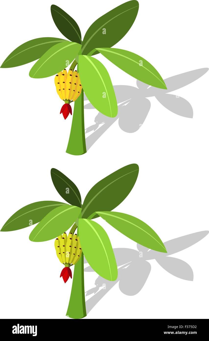 Banana tree with banana fruit vector in flat style - Stock Vector