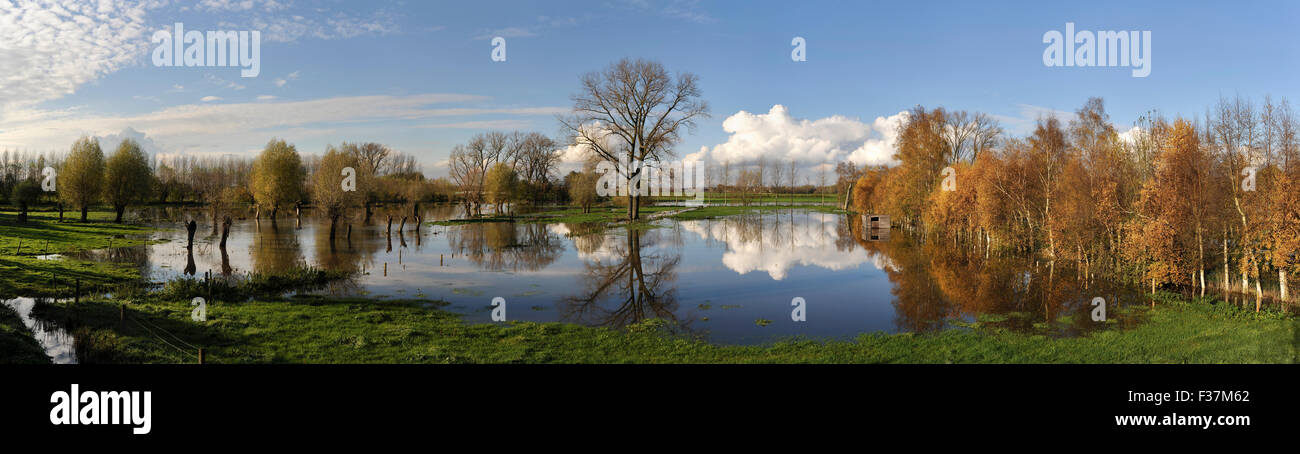 Panoramic landsape of flooded meadows with trees near the Mandelbeek stream in Gottem Stock Photo