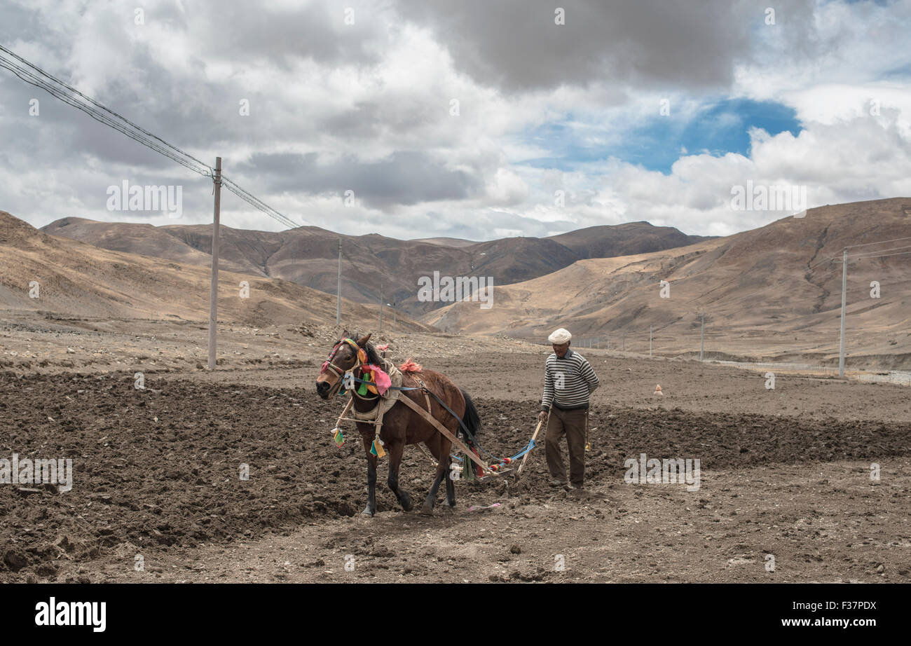 A farmer in Tibet plowing a field with a horse driven plow untilising traditional farming methods. - Stock Image