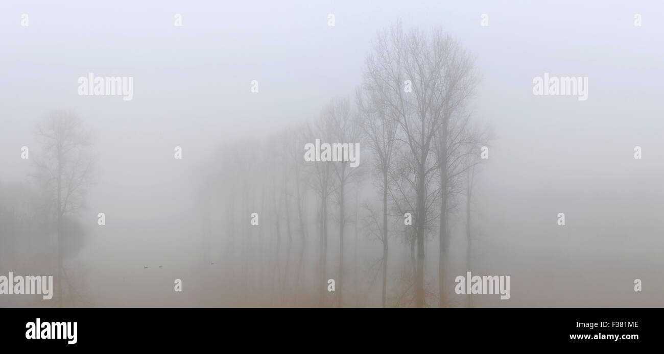 Trees in flooded meadows near the Dender river at Provinciaal Domein De Gavers at Geraardsbergen Stock Photo