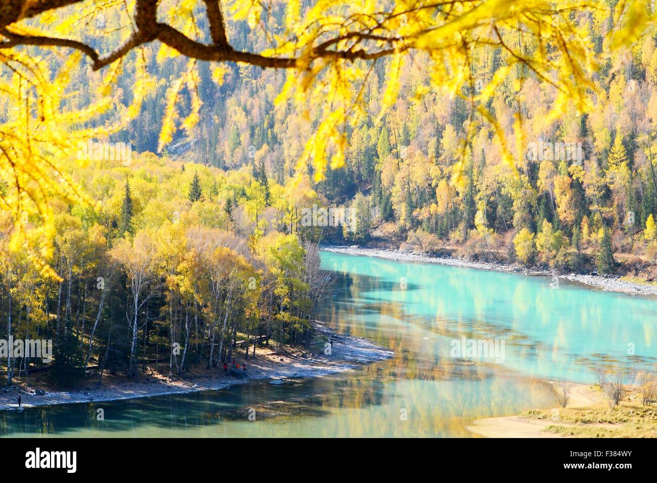 Altay. 1st Oct, 2015. Photo taken on Oct. 1, 2015 shows the autumn scenery of Kanas, northwest China's Xinjiang - Stock Image