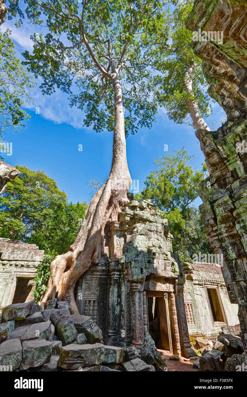 Overgrown ruins of Ta Prohm temple. Angkor Archaeological Park, Siem Reap Province, Cambodia. - Stock Image