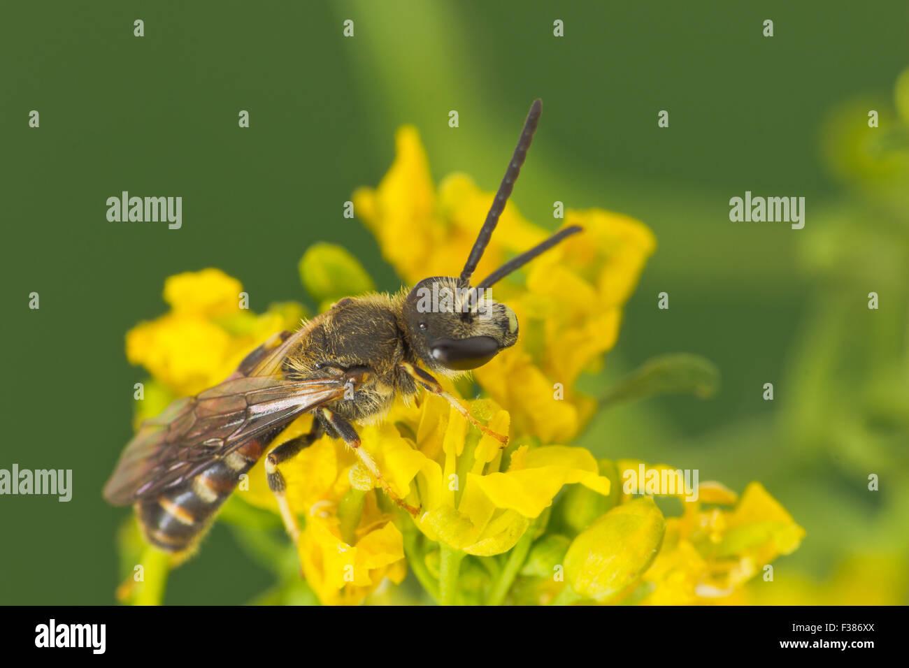 Bee - Stock Image