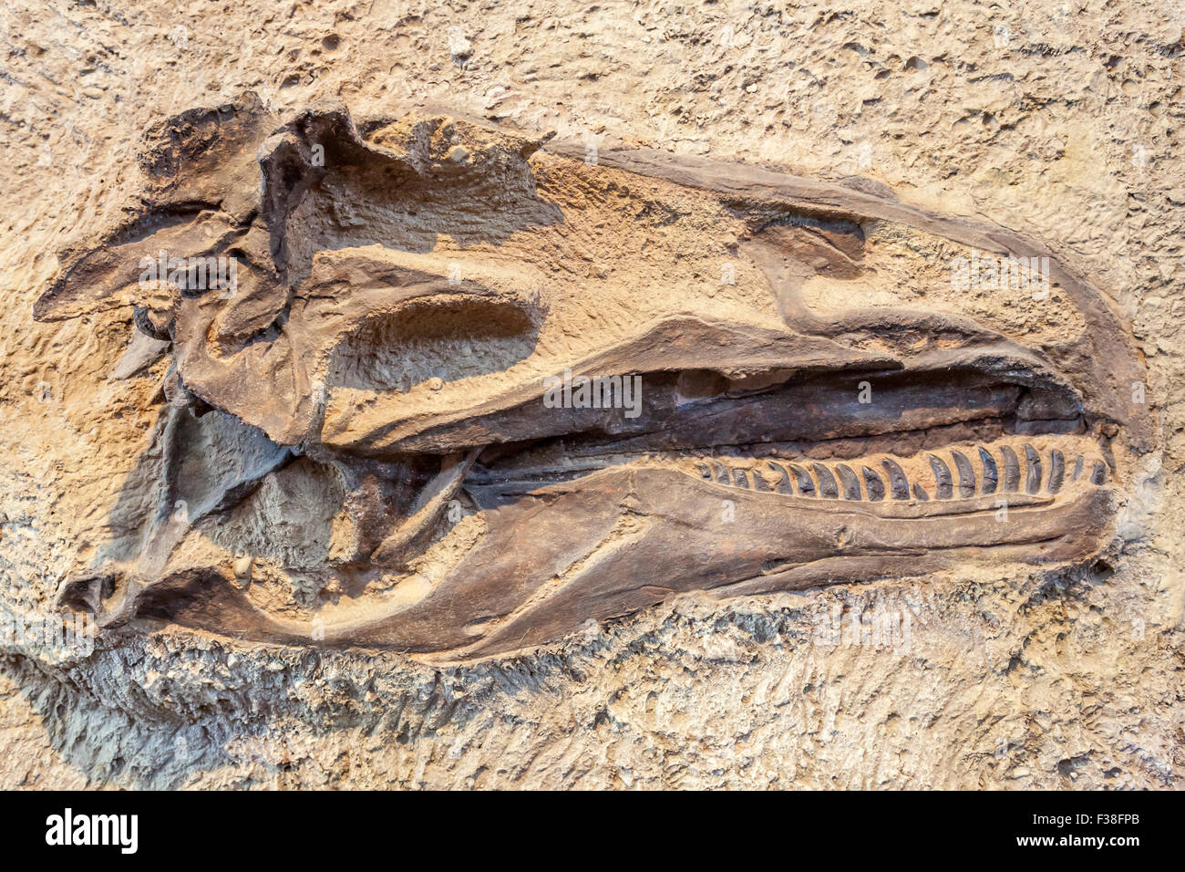 A dinosaur fossil in the Dinosaur National Monument. - Stock Image