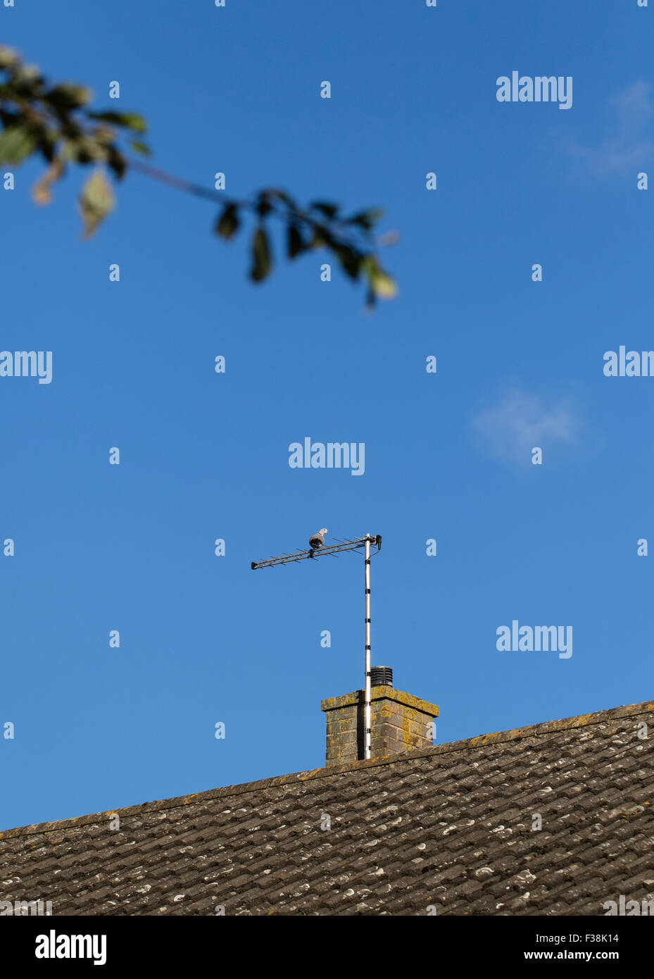 Suburban house rooftop showing TV aerial attached to the chimney stack - Stock Image