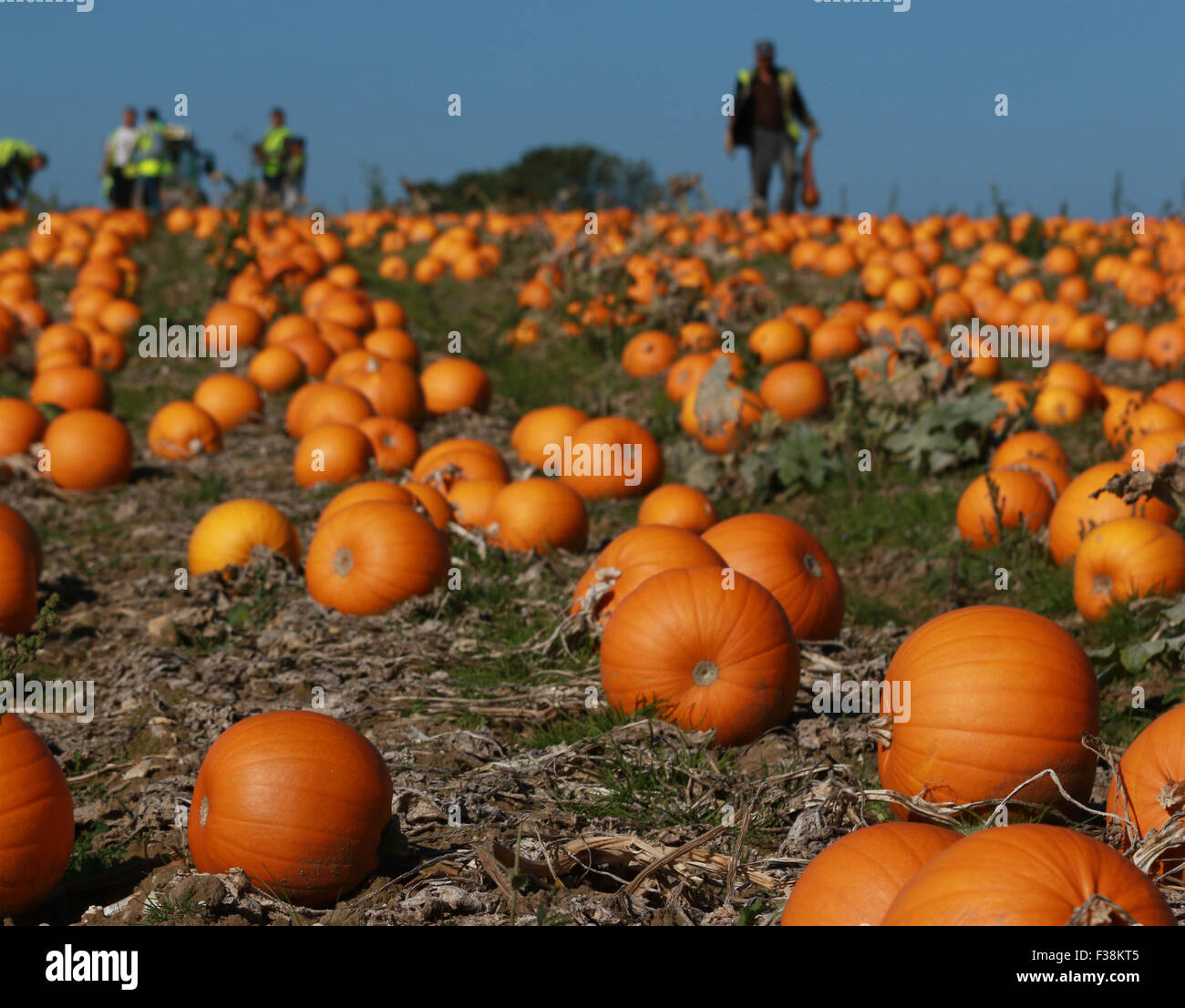 halloween 2015 stock photos & halloween 2015 stock images - alamy