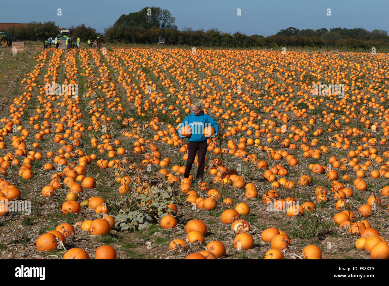 pumpkins . kings lynn, norfolk, uk . 01.10.2015 with only 30 days