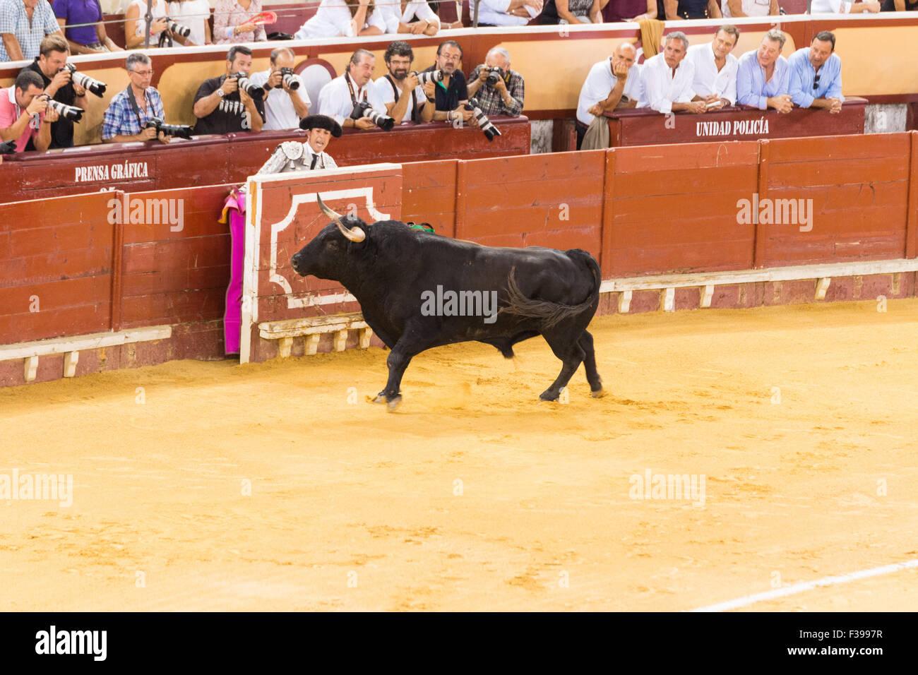 Bull fighting in Spain / Corrida de Toros en España Stock Photo