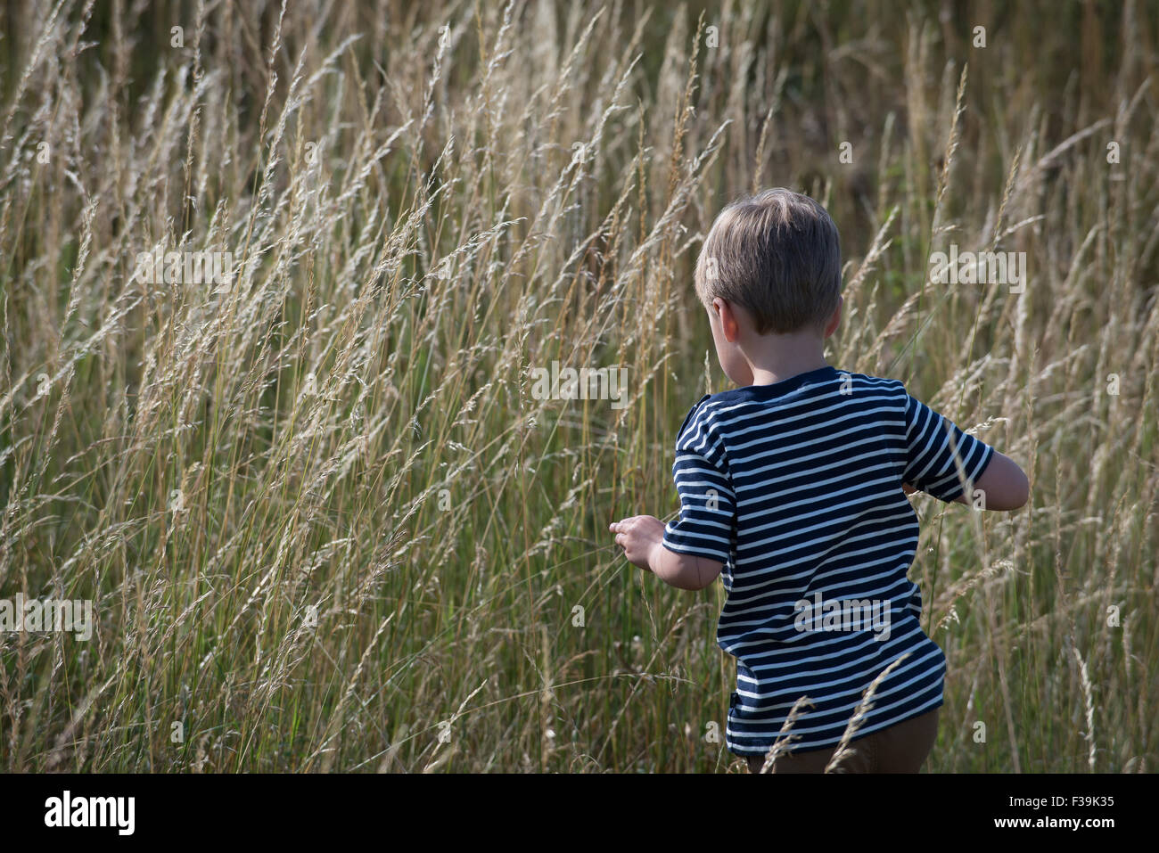 Rear view of a boy walking through long grass - Stock Image