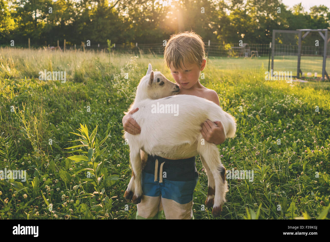 Boy carrying a young goat Stock Photo