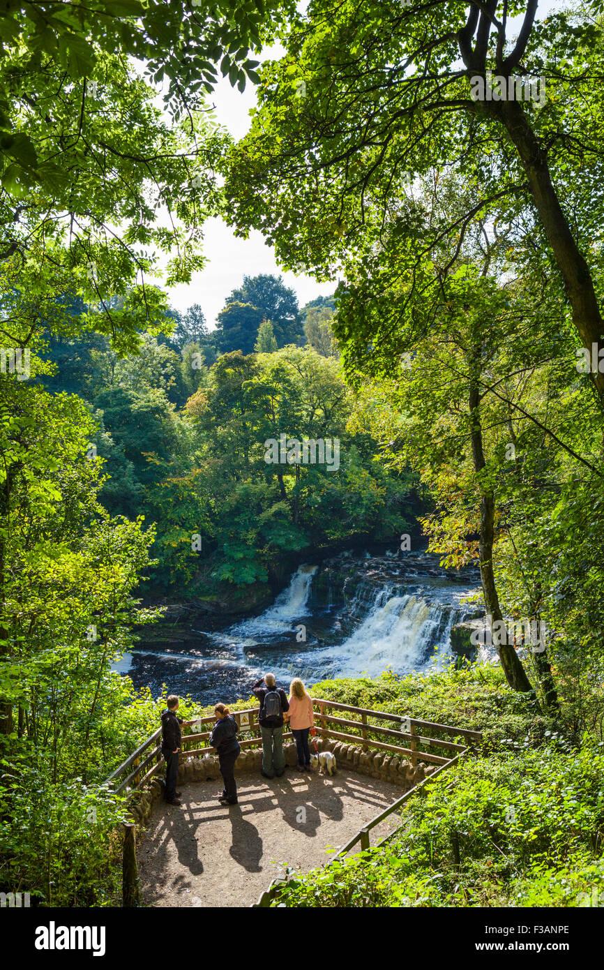 Viewing platform at Aysgarth Middle Falls, Yorkshire Dales, North Yorkshire, England, UK - Stock Image
