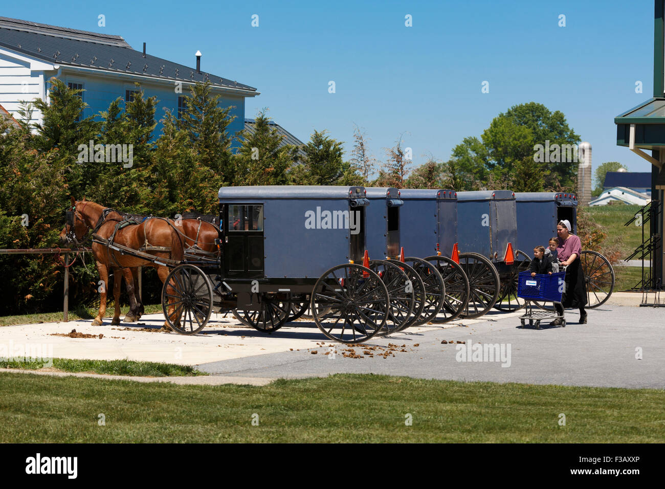 Amish woman pushing shopping cart with two children in it with a row of Amish horse and square carriages hitched - Stock Image