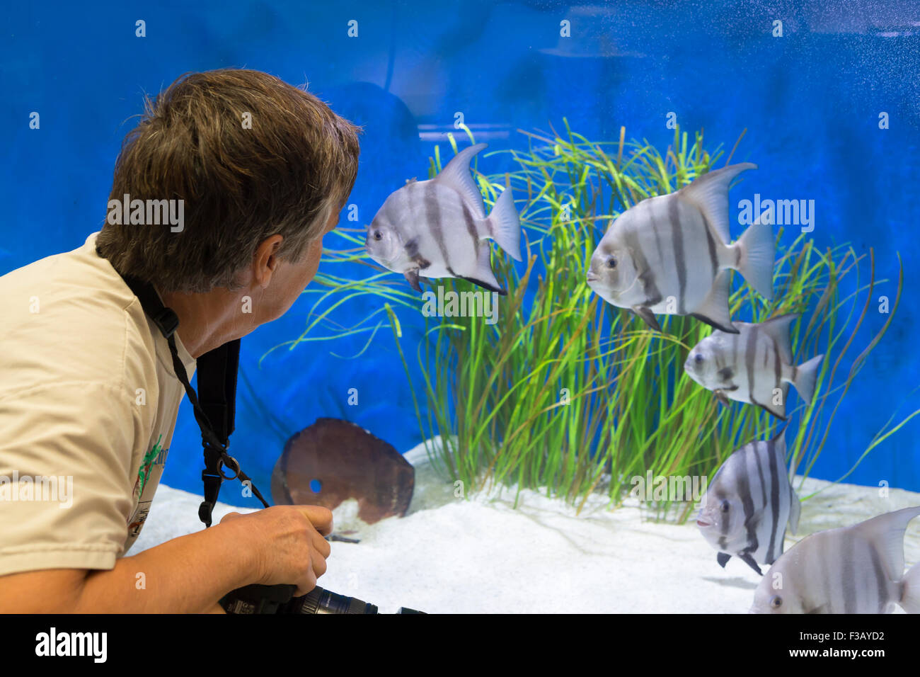 Female looking in to fish tank at the Woods Hole Science Museum. Cape Cod - Stock Image