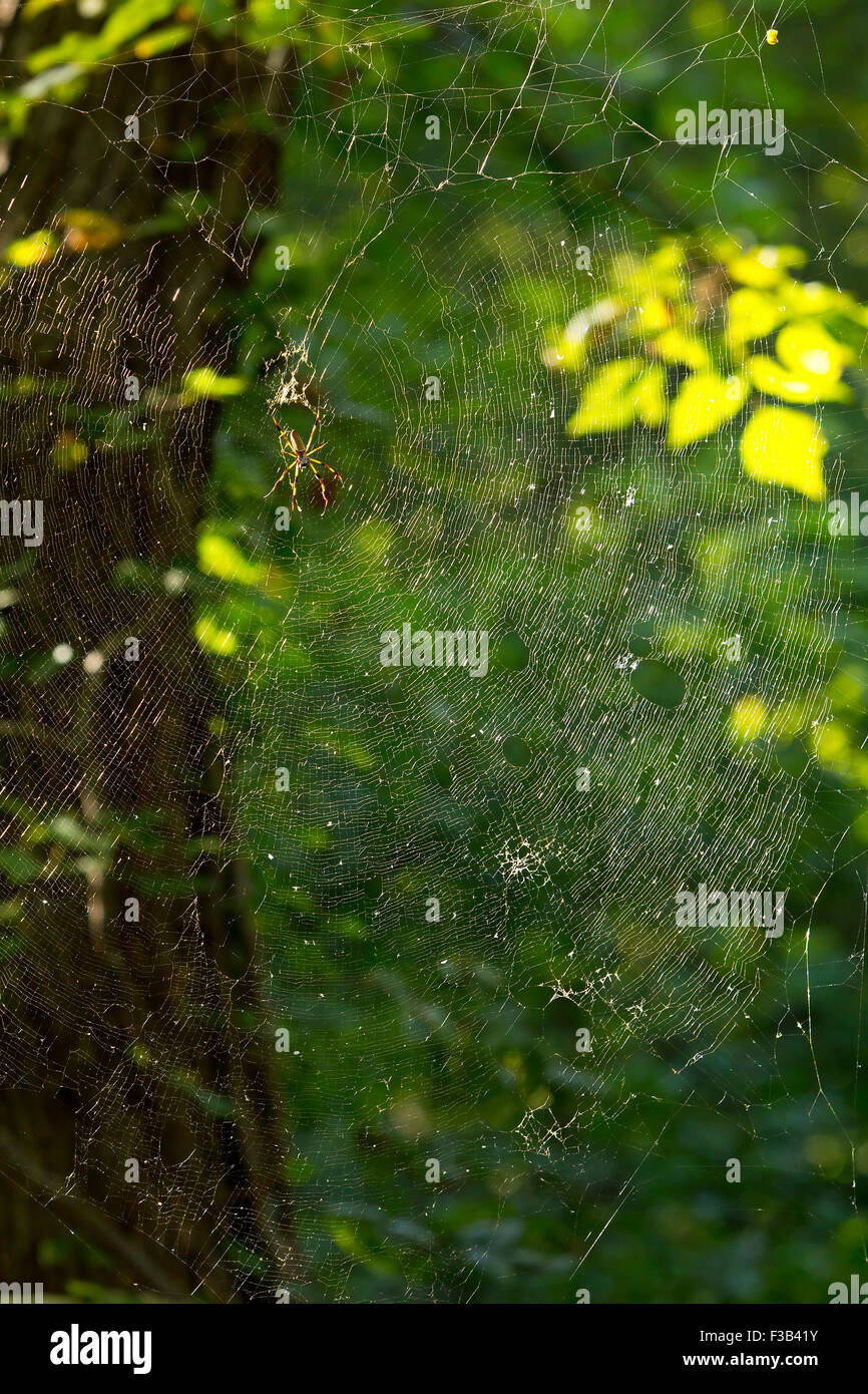 spider dark web scary spooky arachnid - Stock Image