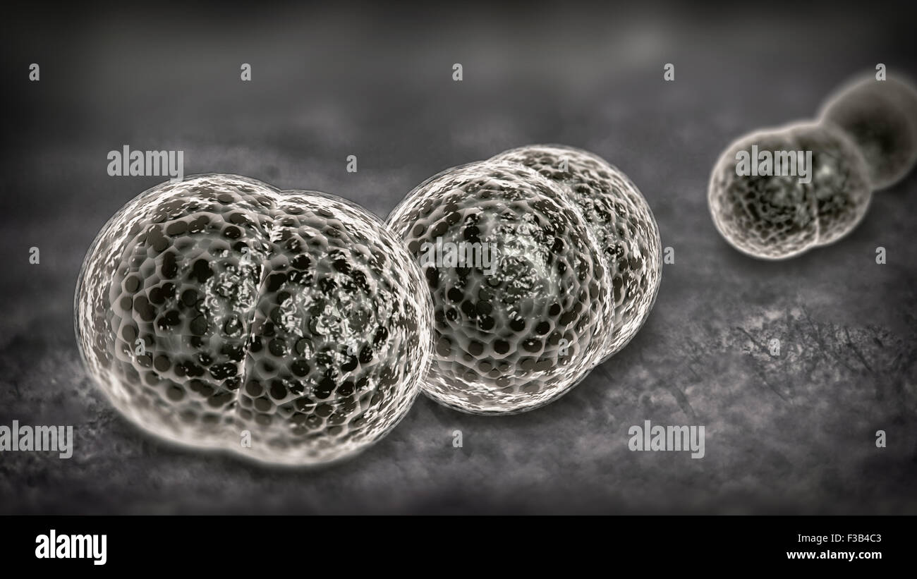 3D microscope close up of meningitis bacteria, also known as meningococcus - Stock Image