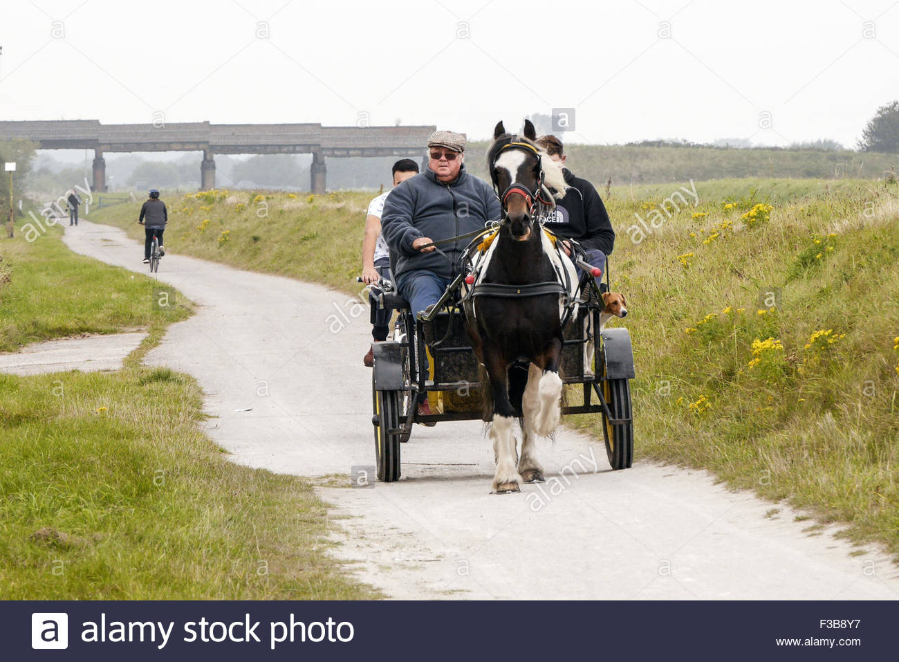 Pony and Trap on Cheshire Lines Sefton - Stock Image