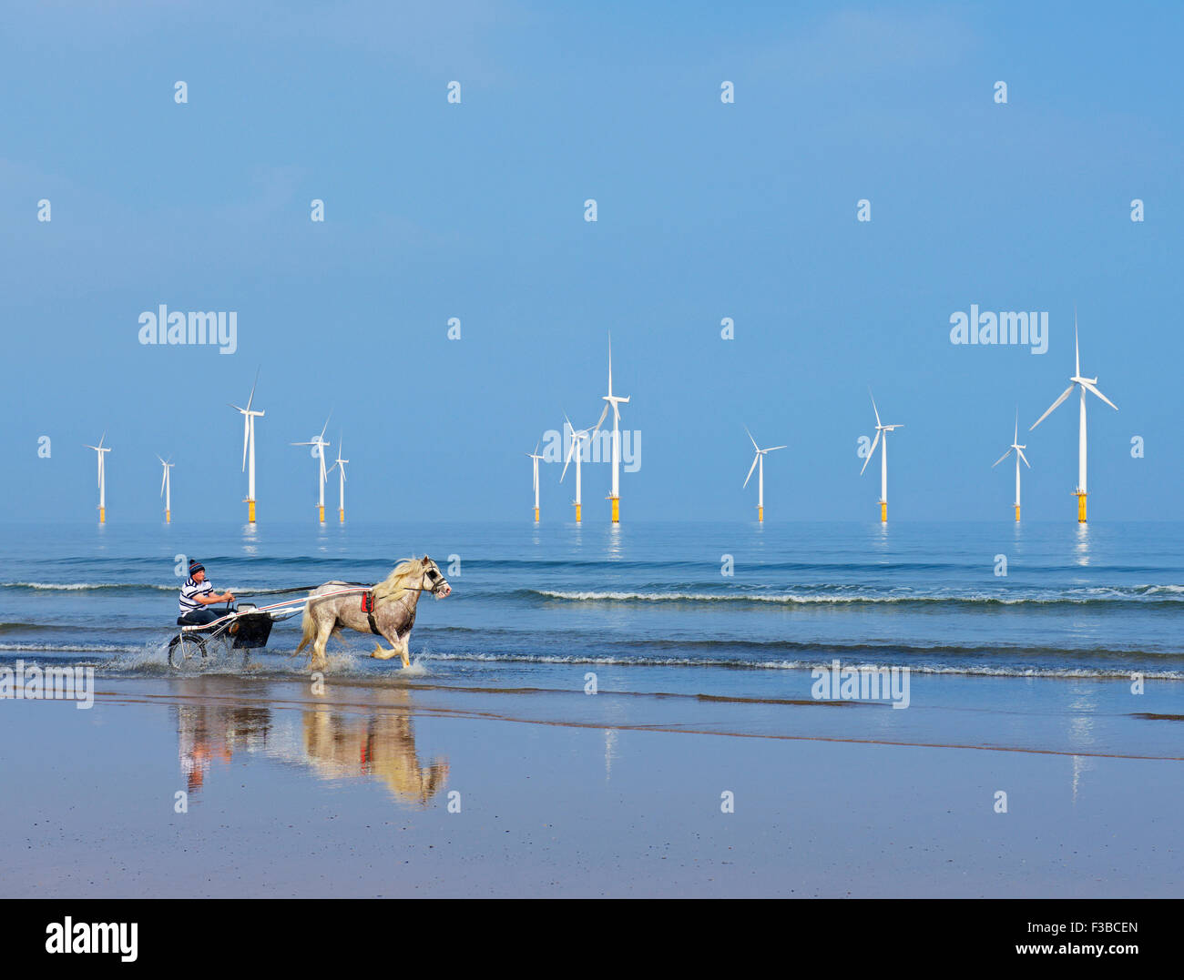 Man with horse and trap, galloping through the shallows on the beach at Redcar, Cleveland, England UK - Stock Image
