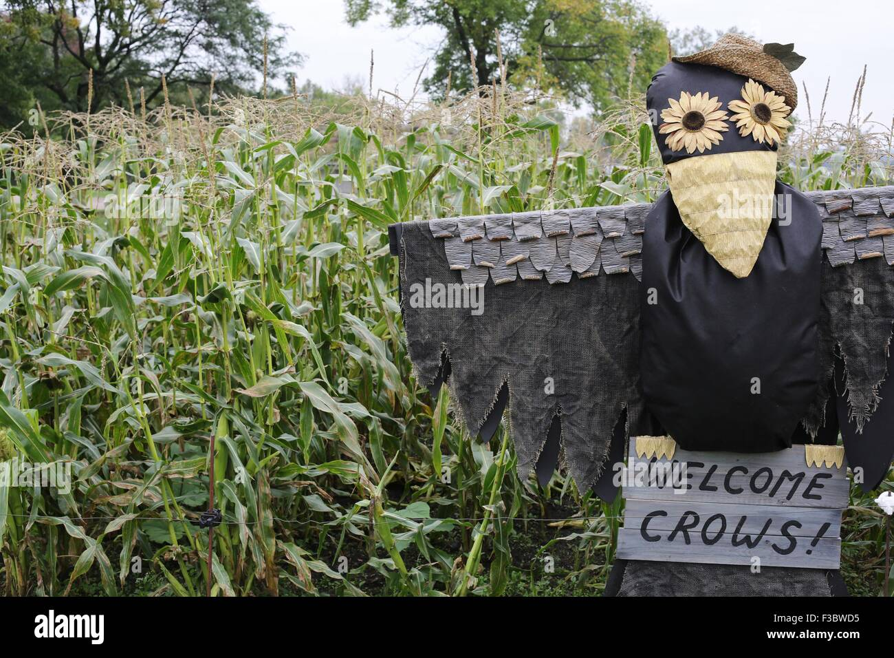 A scarecrow in the shape of a crow, welcoming other crows. - Stock Image