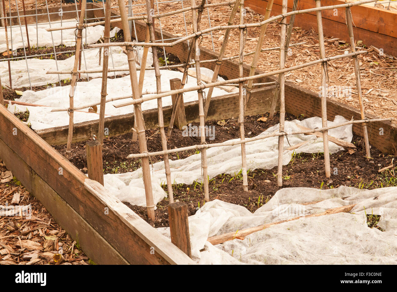Raised vegetable beds prepared for dormancy with garden fabric cover ...