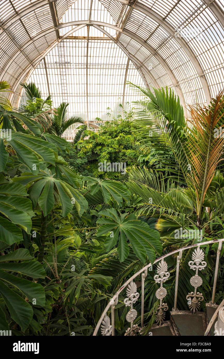 The interior of the Palm House at Kew Gardens, London, UK - Stock Image