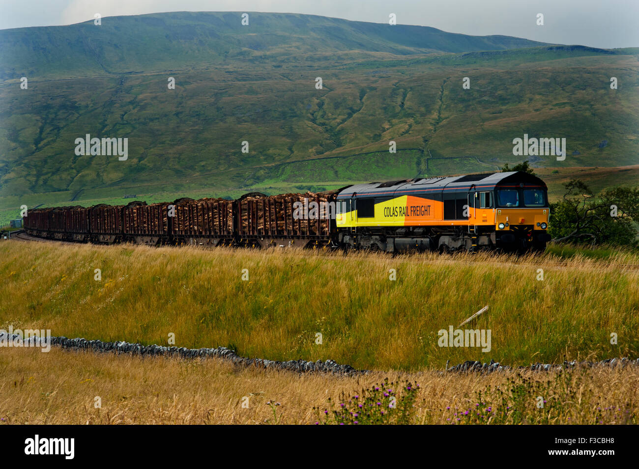 class 66 on Colas Log Train, Ribblehead, Settle to Carlisle Railway - Stock Image