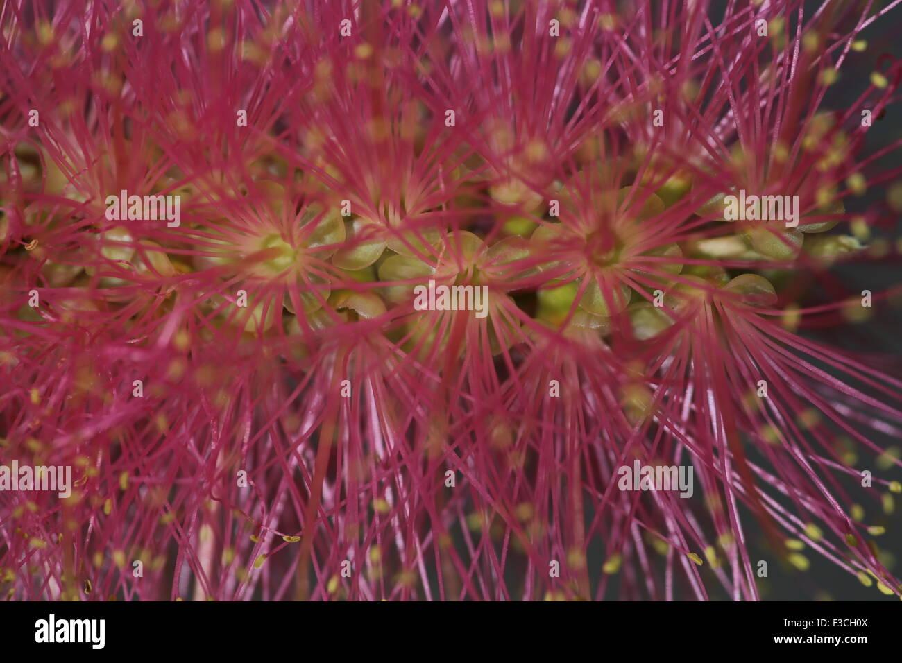Wild Flowers Of Australia Stock Photos Wild Flowers Of Australia