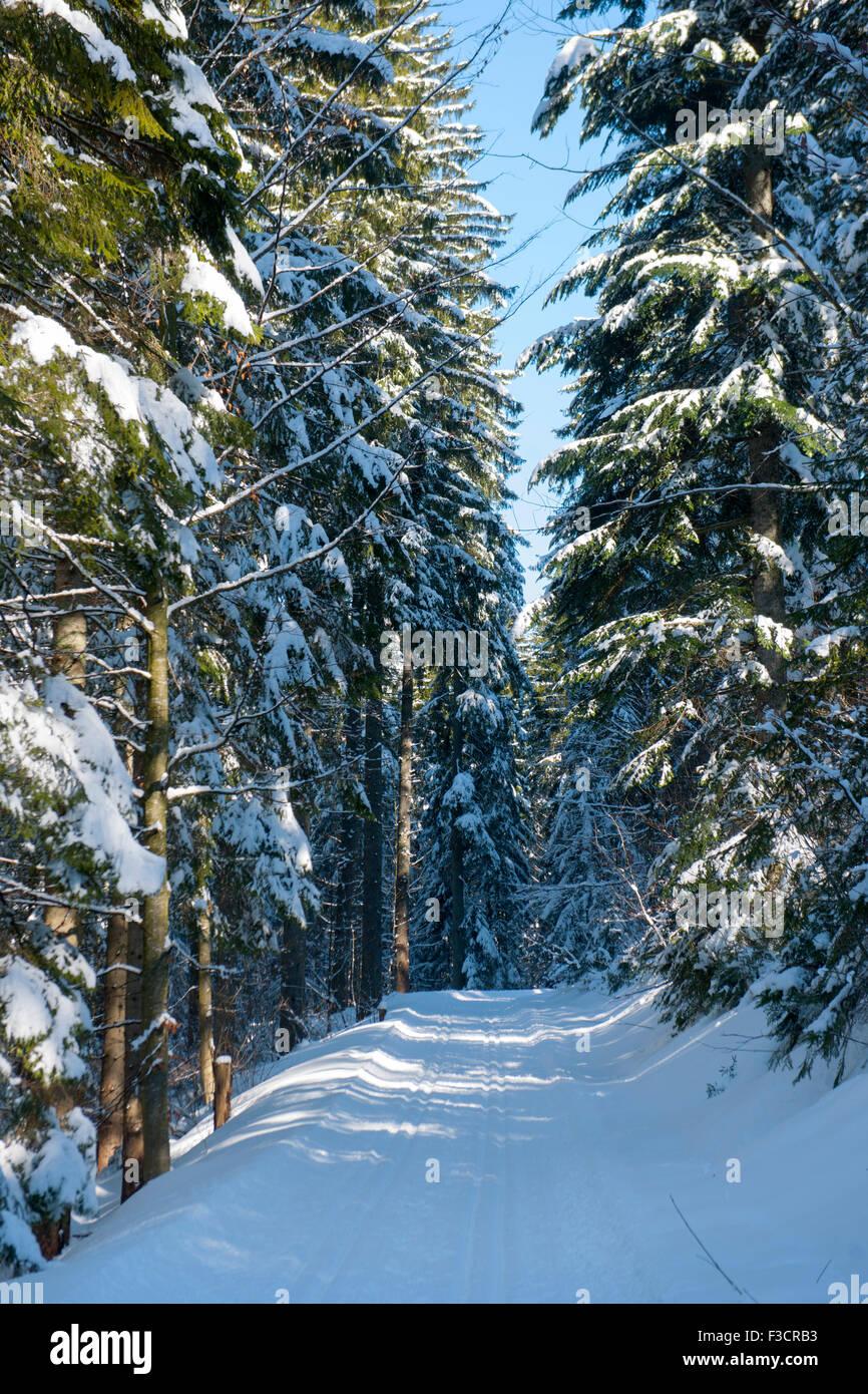 Österreich, Niederösterreich, Lackenhof am Ötscher, Loipe im Wald - Stock Image