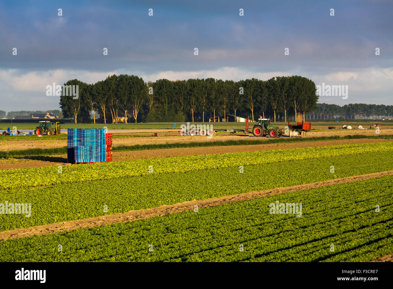 Agriculture cultivation fields Pontorson Avranches Lower Normandy Manche France Europe - Stock Image