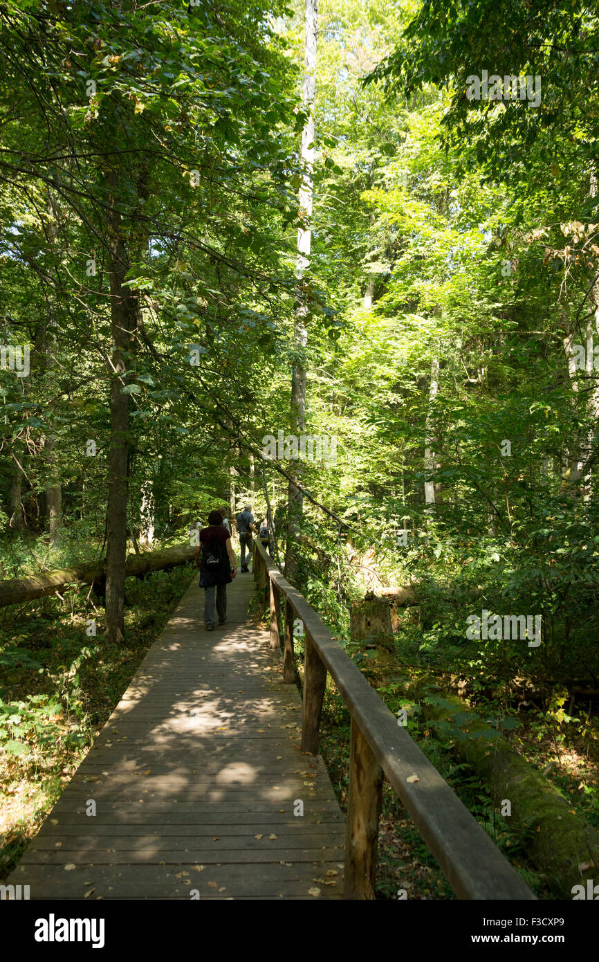 Białowieża National Park landscapes Poland Podlaskie Voivodeship, last temperate primaeval forest - Stock Image