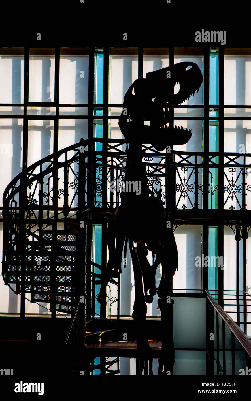 Silhouette of dinosaur in the Royal Belgian Institute of Natural Sciences / Museum of Natural History, Brussels, - Stock Image