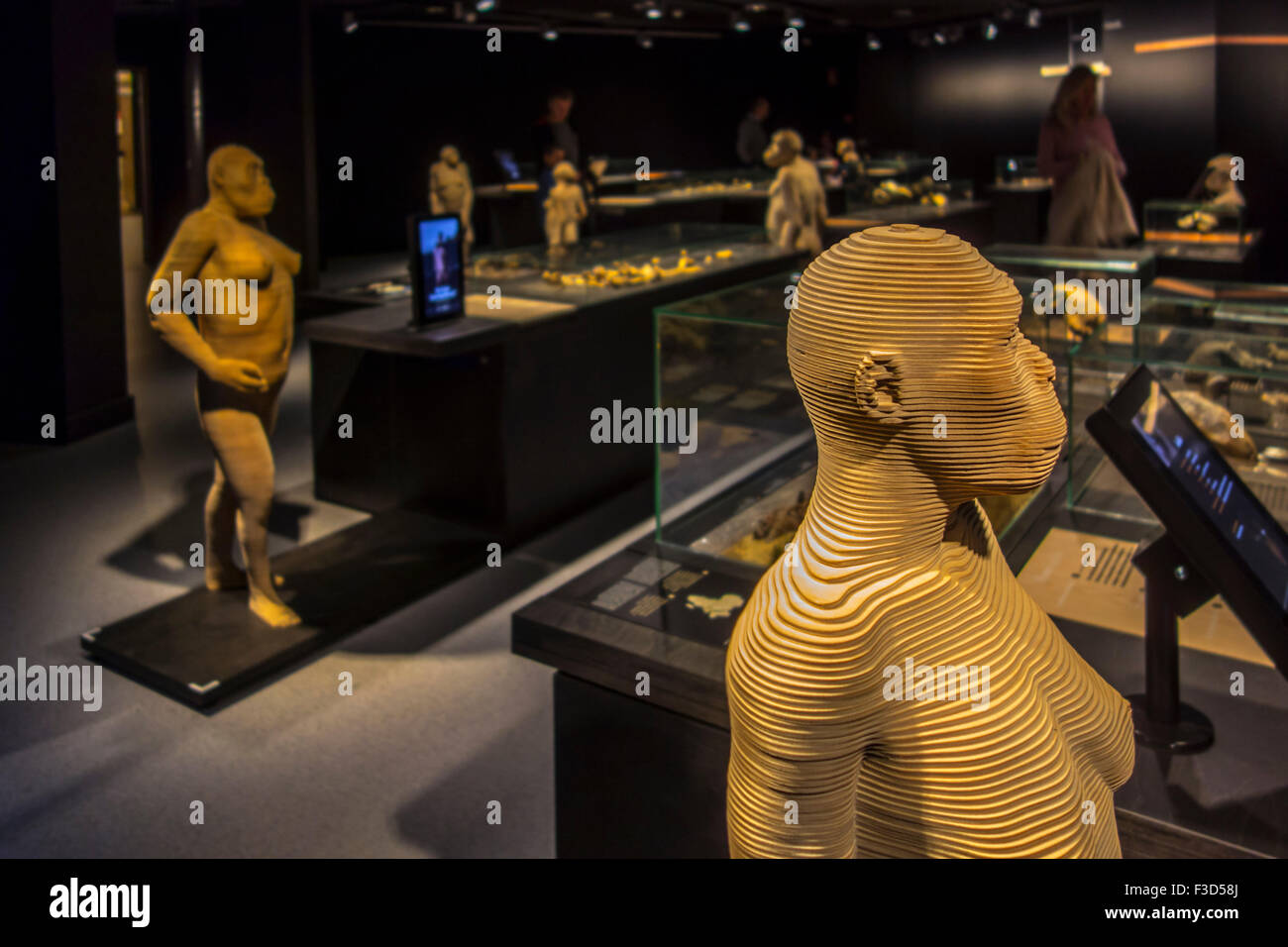 Life-size 3D hominid species that illustrate human evolution, Royal Belgian Institute of Natural Sciences, Brussels, - Stock Image
