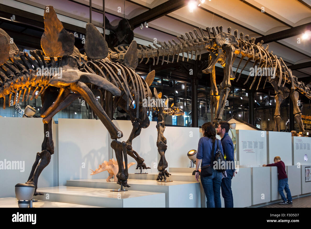 Skeletons of dinosaurs at the Dinosaur hall, Royal Belgian Institute of Natural Sciences / Museum of Natural History, - Stock Image