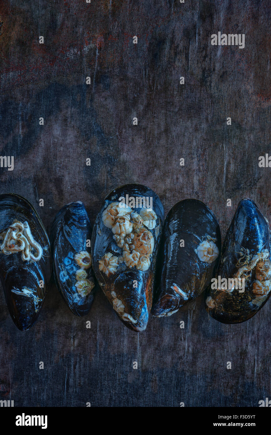 Fresh live mussels Stock Photo