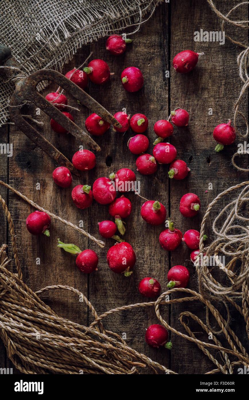 Fresh organic Radishes - Stock Image