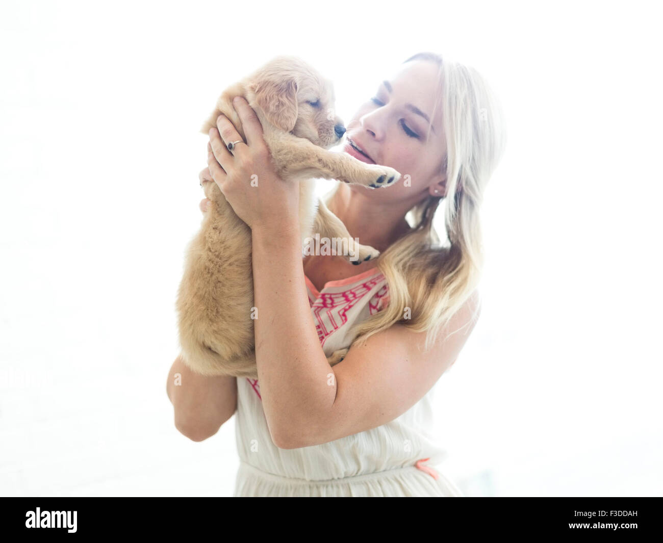 Studio shot of Golden Retriever puppy with owner - Stock Image
