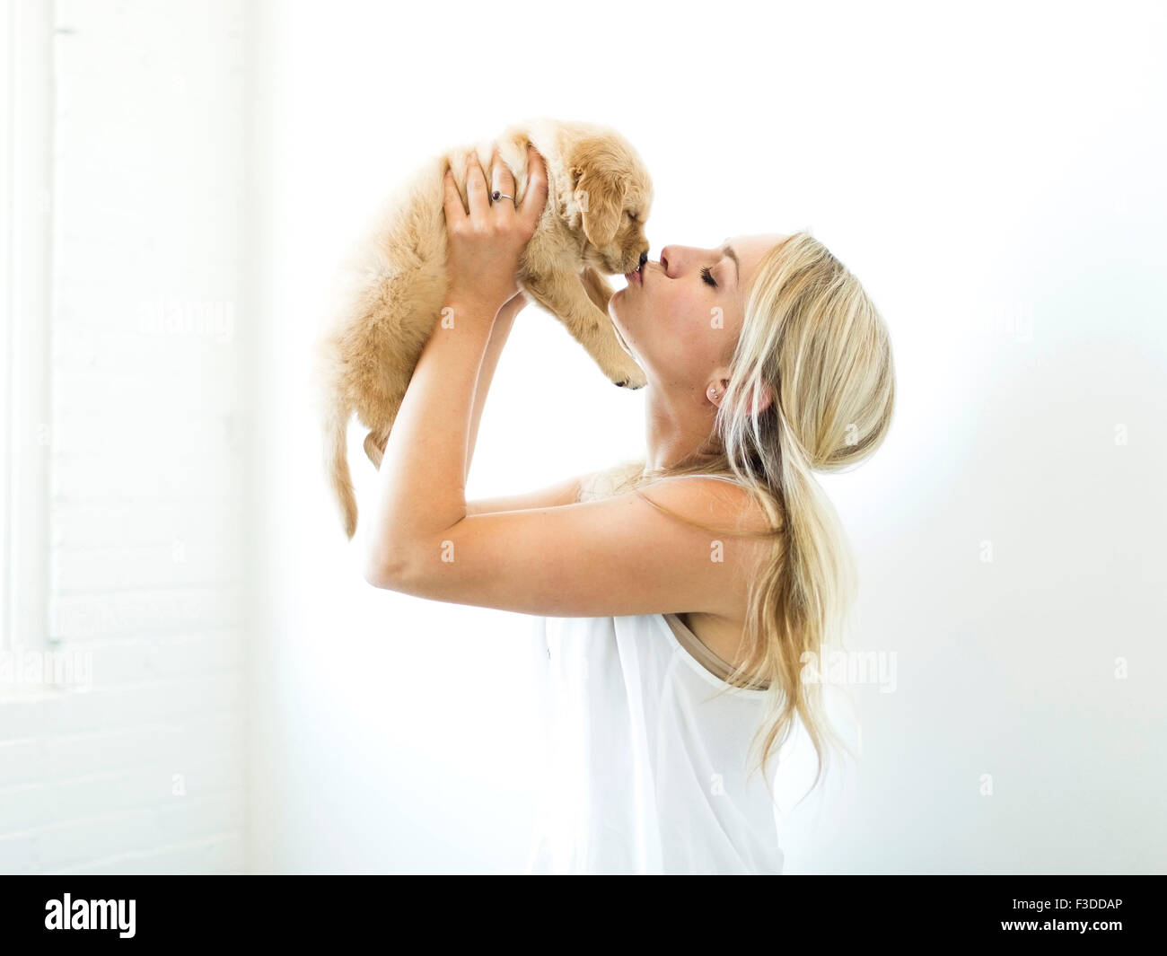 Studio shot of owner kissing Golden Retriever puppy - Stock Image