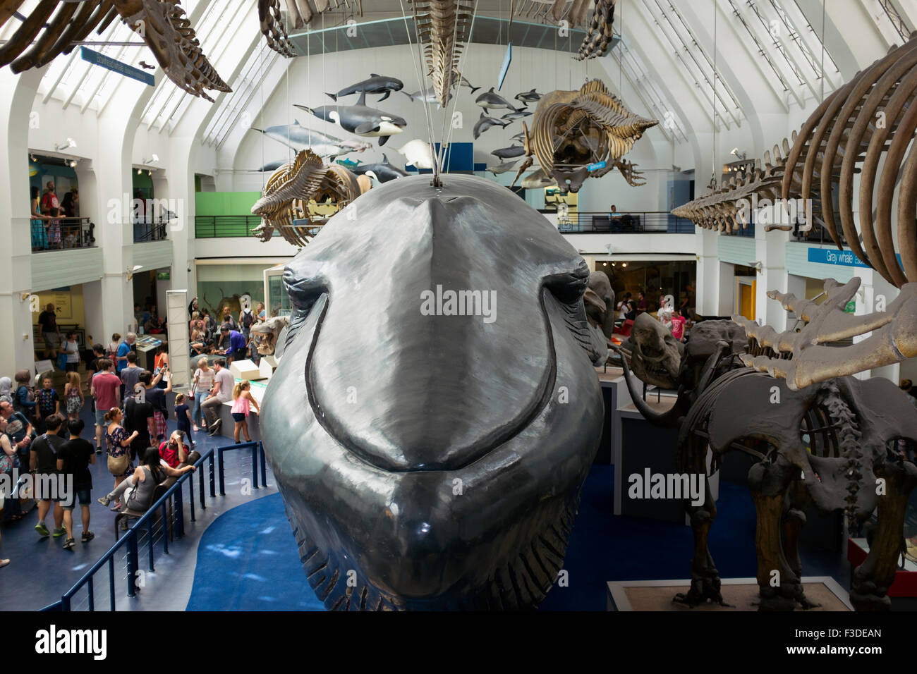 Lifesize models of mammals at The Natural History Museum in London. - Stock Image